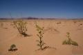 Wüstenlandschaft, Foto: Maria Estalla Dürnecker